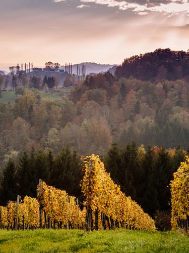 WeingartenHerbstTamanGa.jpg