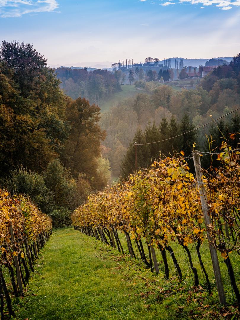 WeingartenGamlitzHerbst.jpg