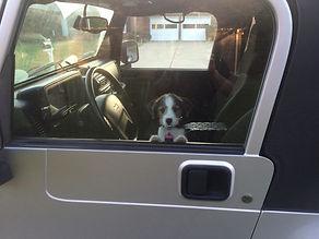 Jeep Wrangler Dog