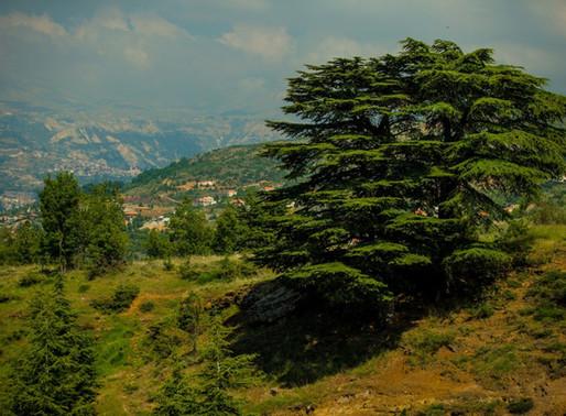Cedarland: The way through Lebanon as a refugee