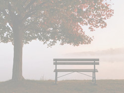 brown wooden bench under shade of tree d