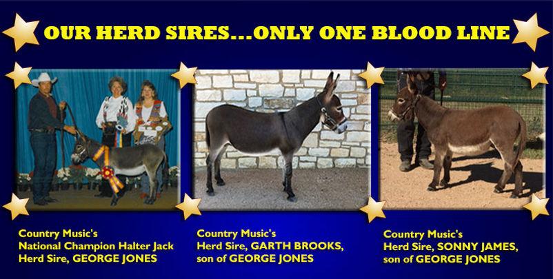 herd_sires.jpg