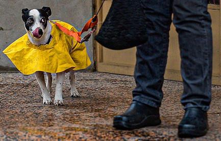 Rain Dog  Charleston, WV