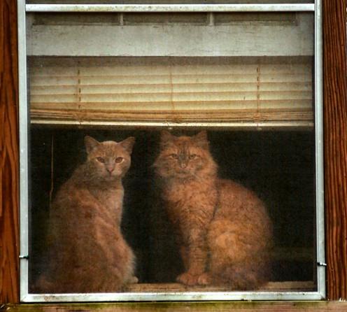 Watch Cats  Beaufort, SC