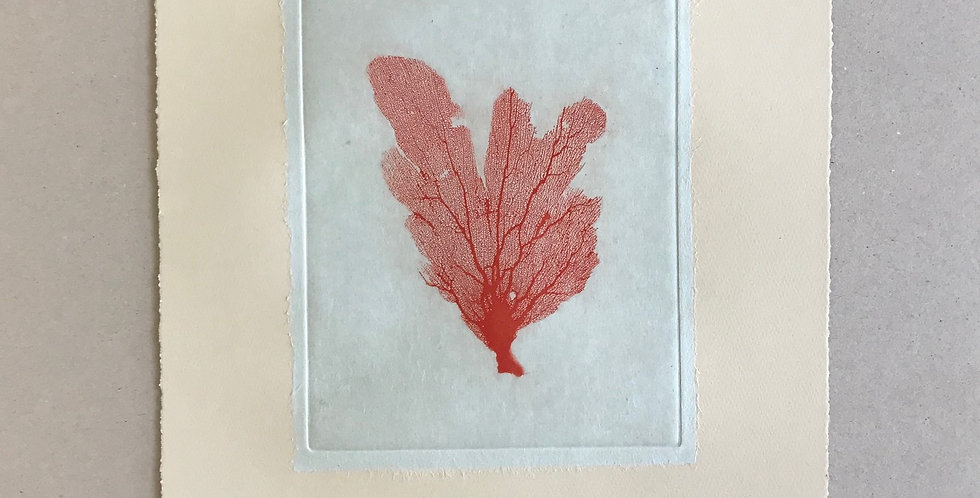 Sea Fan I (Red)