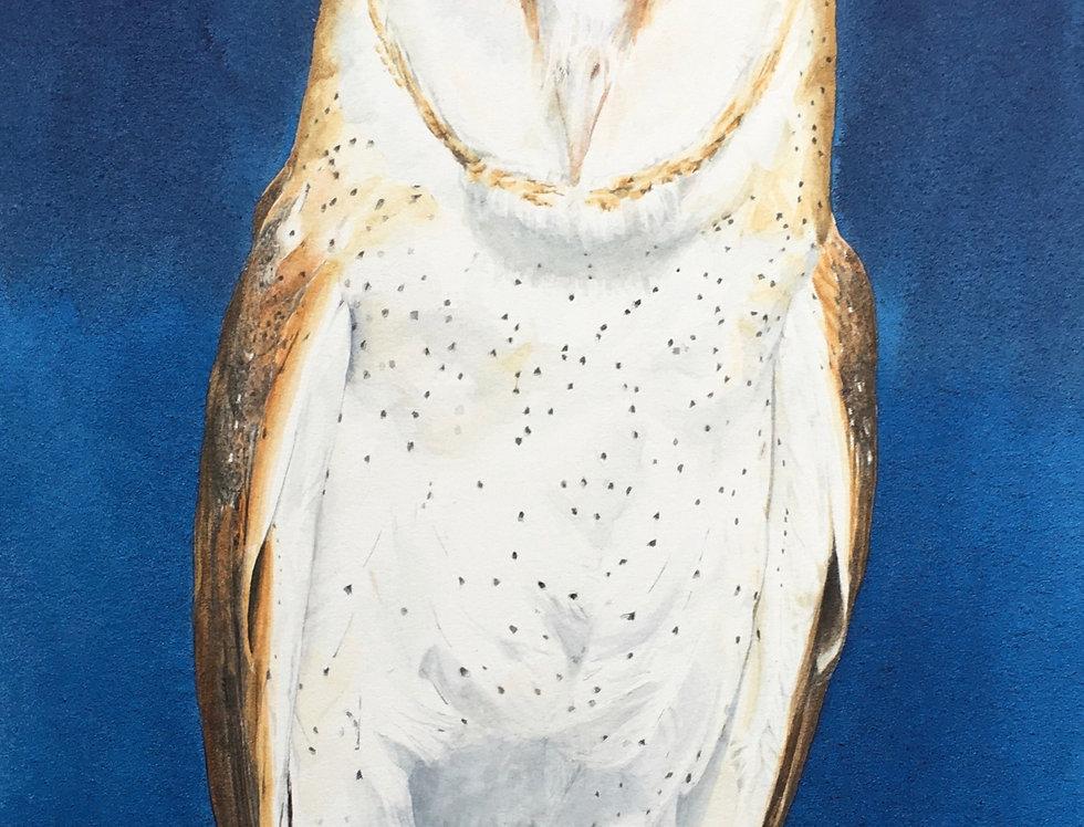 Indigo Barn Owl