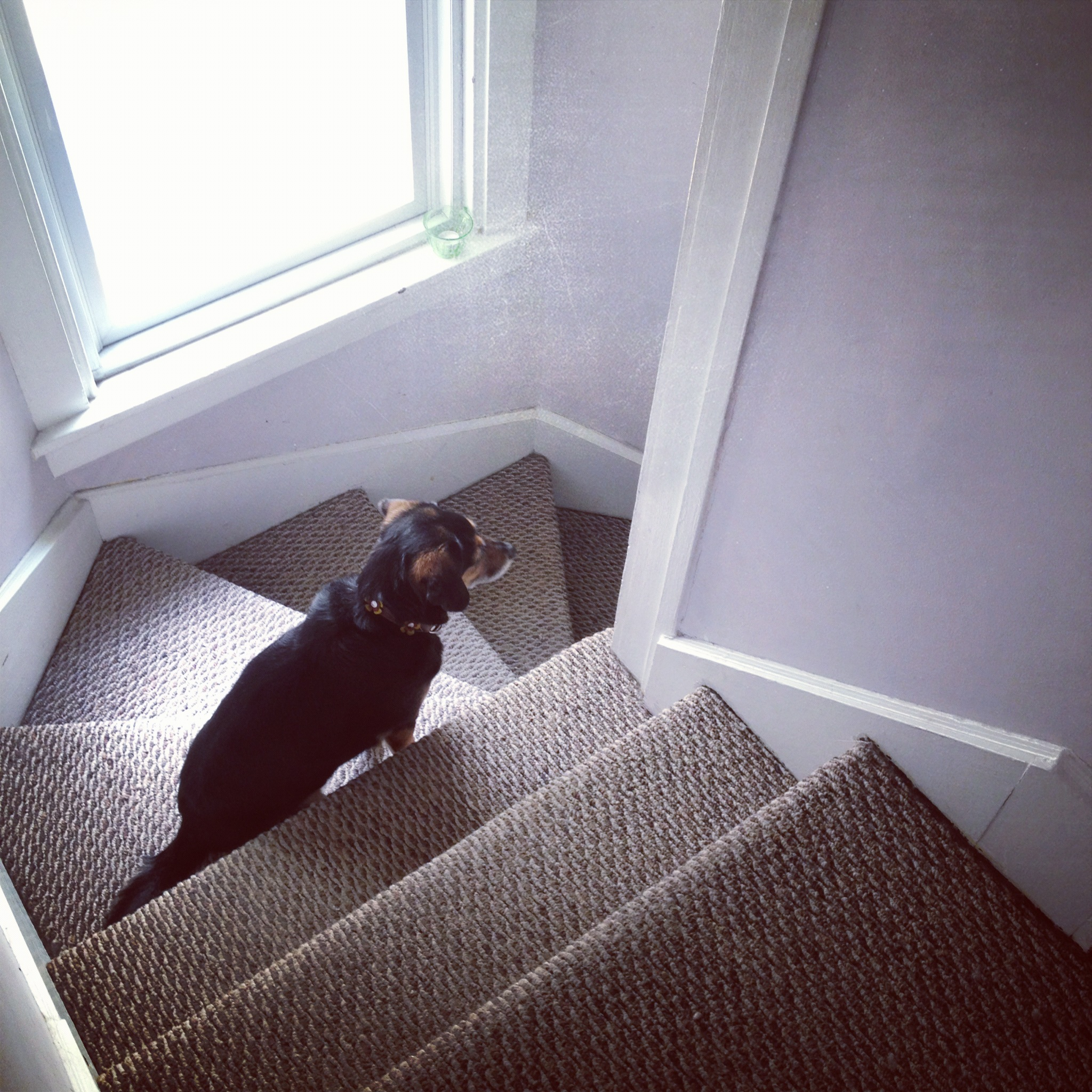 Daisy on the Stairs