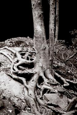 The Jenn Tree