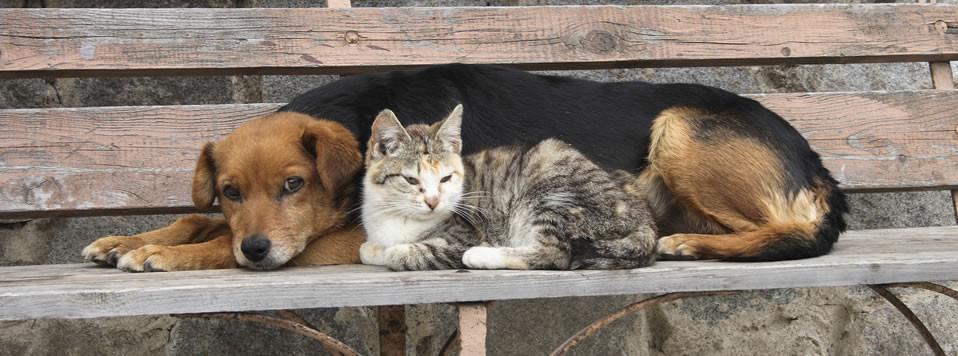 pet overpopulation essay