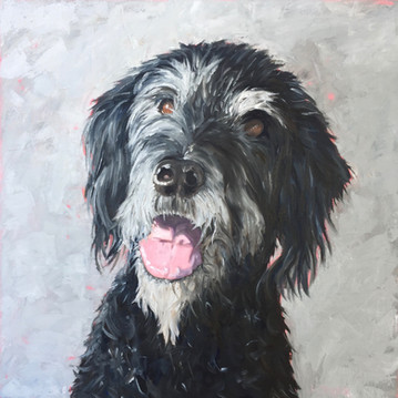 buster - labradoodle