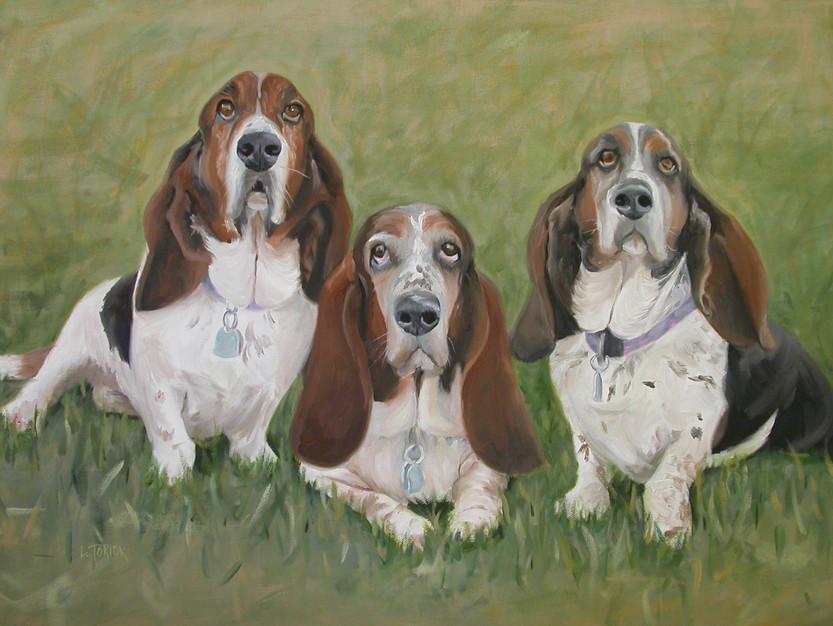 3 basset hounds
