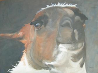 annie - llama