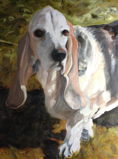 nike - basset hound