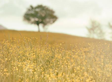 Sophrologie et soins énergétiques : quel accompagnement thérapeutique choisir ?