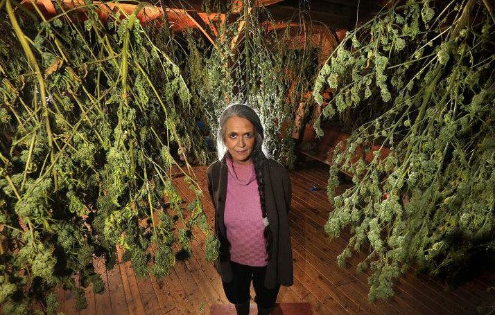Only 1% of California Cannabis Growers are Licensed