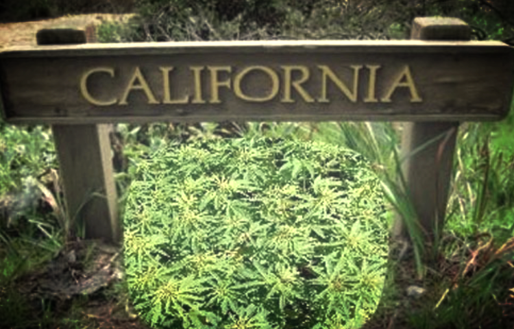 California: Home to World's Largest Legal and Illegal Cannabis Markets