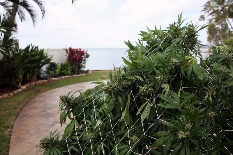 Hawaii Marijuana Dispensary