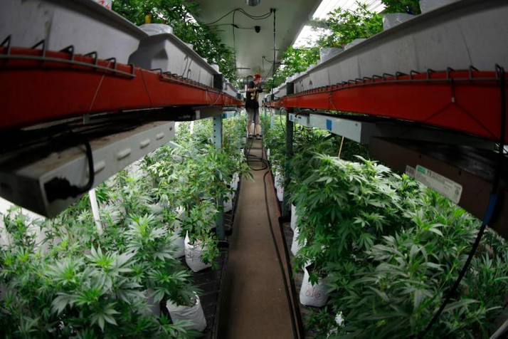 Testing gets Expensive for Colorado Growers