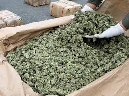 California Cannabis Surplus