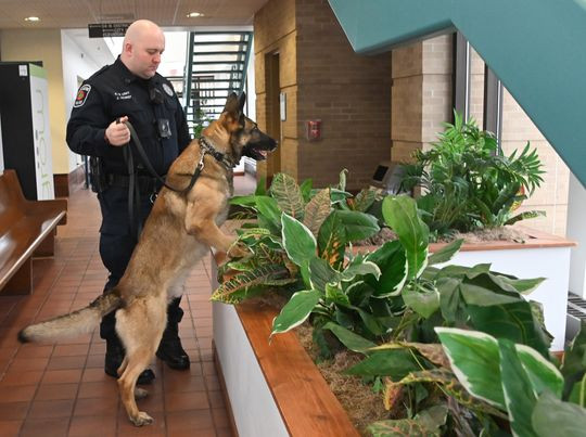 Marijuana Legalization is Putting Some Police Dogs Out of Business