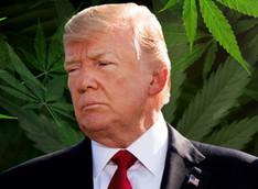Trump Says Putting Marijuana On The Ballot Makes Republicans Lose