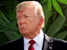 Trump Says Putting Marijuana On The Ballot Makes Republicans Lose