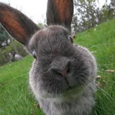 DEA warns of stoned rabbits