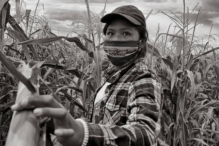 Cannabis Chaos in Navajo Nation