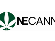The New England Cannabis Convention Returns to Boston
