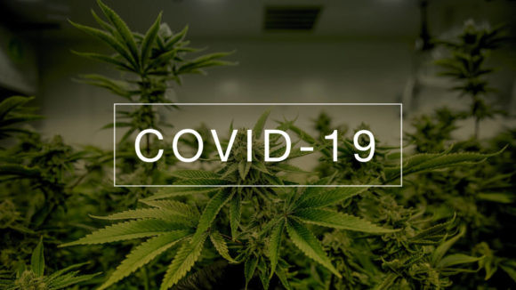 State by State Guide to Cannabis Regulations During Covid-19