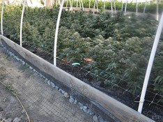 California Gives $100 Million to Help Growers Become Compliant