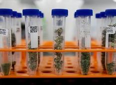 Arizona Dispensaries Will Be Required to Test All Medical Marijuana