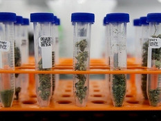 Arizona Dispensaries Will Be Required to Test All Medical Marijuana