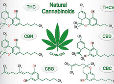 Cannabinoids: The Inside Scoop