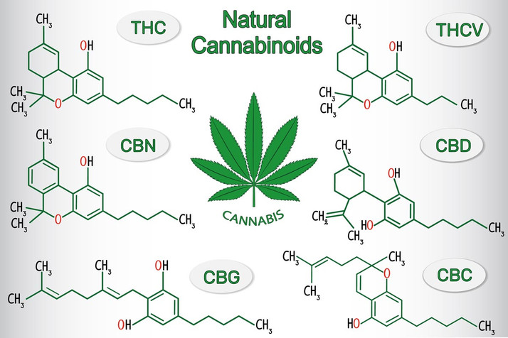 Cannabinoids: The Inside Scoop