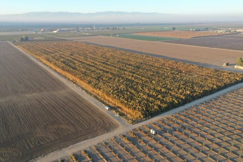 Cops Seize 1 Million Plants. Company Says They Were Legal Hemp