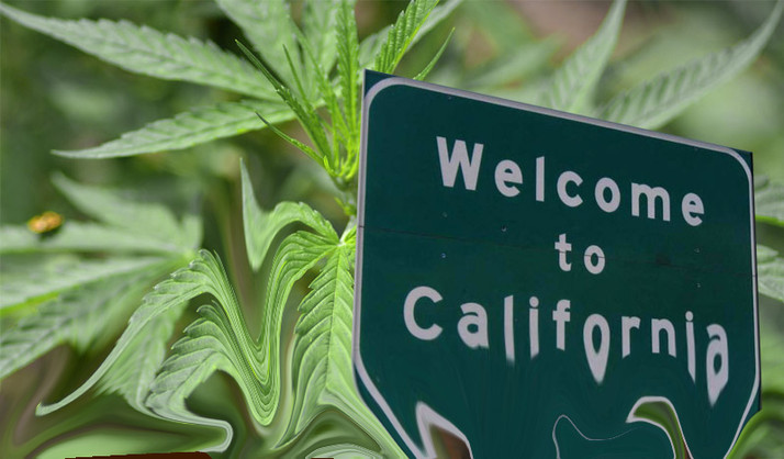 California's Cannabis Industry in Crisis