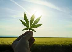 Why Legal Cannabis is Good for Arizona