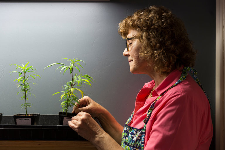 Older Women and Marijuana www.cannanews.buzz