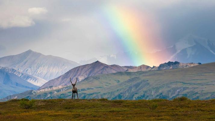 Consulting Group Wins Alaska Grow License