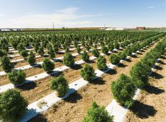 Yeti Farms Doubles Plant Count for Medical Cannabis