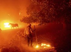 """""""Apocalyptic"""" California Wildfires Consume Cannabis Farms"""