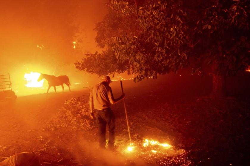"""""""Apocalyptic"""" California Wildfires Consumer Cannabis Farms"""
