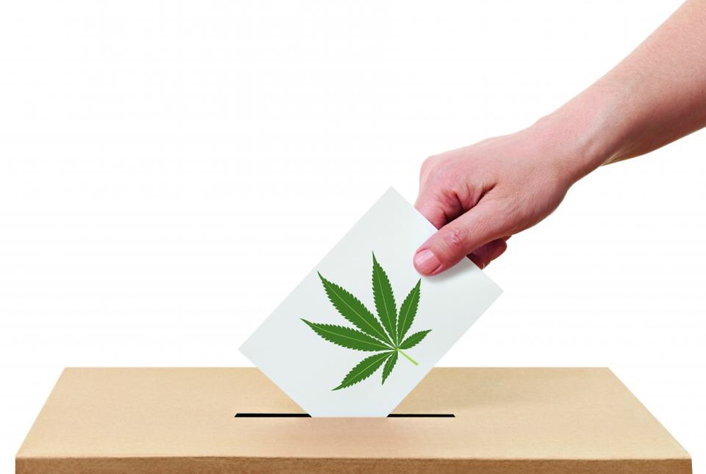 Marijuana on the Ballot this Election Day