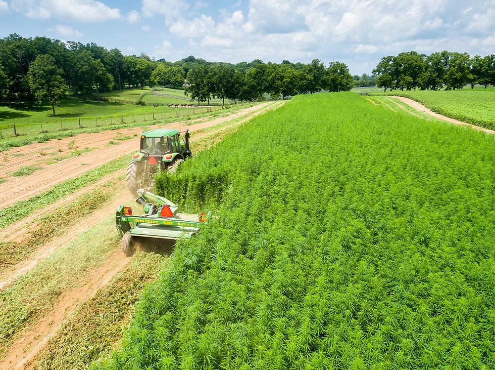 DEA To Kentucky: Your Hemp is Illegal