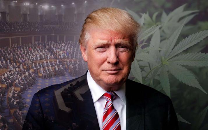 Trump Says Marijuana Policies Aren't Going to Change