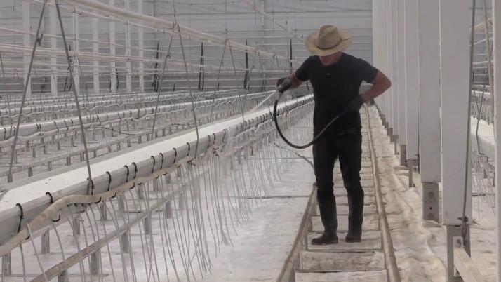 Former Tomato Farm Transforms into Cannabis Grow Operation