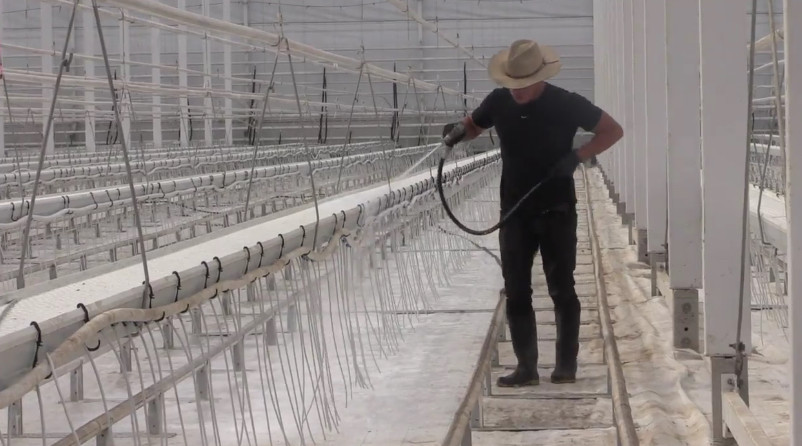 Former Tomato Farm Transforms into Cannabis Grow Operation. www.cannanews.buzz