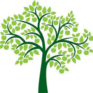 ANP Tree.jpg