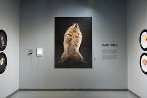 Evan Kafka
